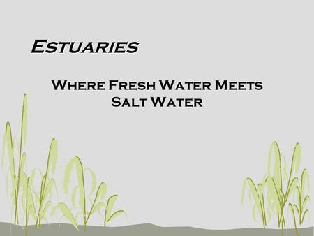 Estuaries Where Fresh Water Meets Salt Water. Estuary Defined An estuary is a partially enclosed body of water formed where fresh water from rivers and.