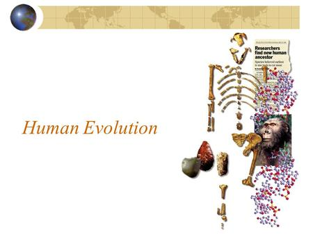 Human Evolution. Background Info Paleanthropologist: Scientist who studies fossil evidence of human evolution Hominid: Humans and immediate ancestors.