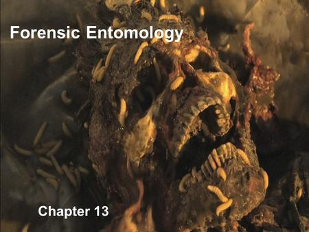Chapter 13 Forensic Entomology. Determining postmortem interval (PMI) using necrophagous insects (or other arthropods). Carrion-eating insects often associated.