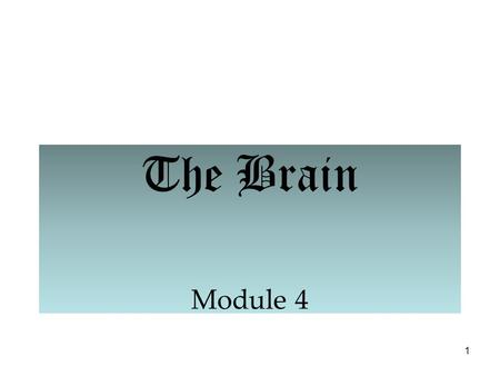 1 The Brain Module 4. 2 The Brain: Older Brain Structures The Brainstem is the oldest part of the brain, beginning where the spinal cord swells and enters.