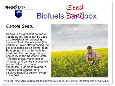 Canola Seed: Canola is a significant source of vegetable oil, and it can be used as a feedstock for producing biodiesel fuel. Canola meal (the portion.