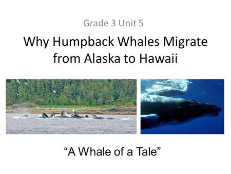 "Why Humpback Whales Migrate from Alaska to Hawaii Grade 3 Unit 5 ""A Whale of a Tale"""