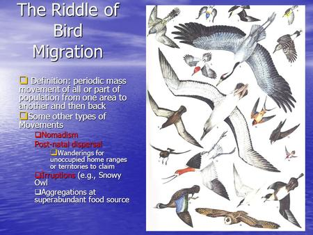 The Riddle of Bird Migration  Definition: periodic mass movement of all or part of population from one area to another and then back  Some other types.