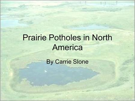 Prairie Potholes in North America By Carrie Slone.