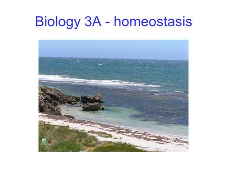 Biology 3A - homeostasis. The organism and its environment Organisms have needs and produce wastes They must survive in environments that may be inconstant.