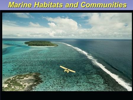 Marine Habitats and Communities. Main Concepts – Marine Habitats  Physical environment where community of organisms live is called a habitat.  Combination.