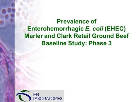 Prevalence of Enterohemorrhagic E. coli (EHEC) Marler and Clark Retail Ground Beef Baseline Study: Phase 3.