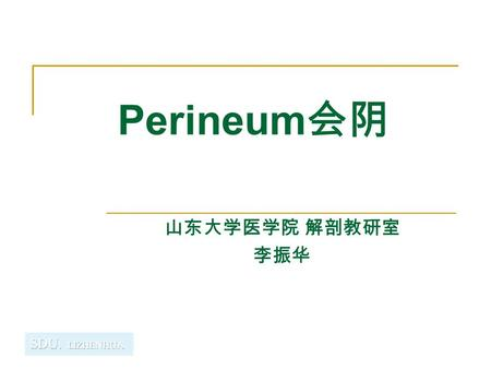 Perineum 会阴 山东大学医学院 解剖教研室 李振华. Perineum General features Region of below pelvic diaphragm A diamond-shape space whose boundaries are those of the pelvic.
