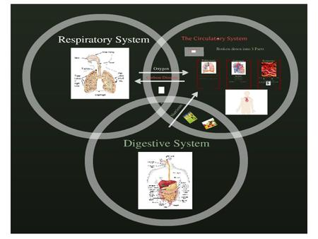 PURPOSE OF RESPIRATION If you were to design an efficient breathing system, what would the requirements be?