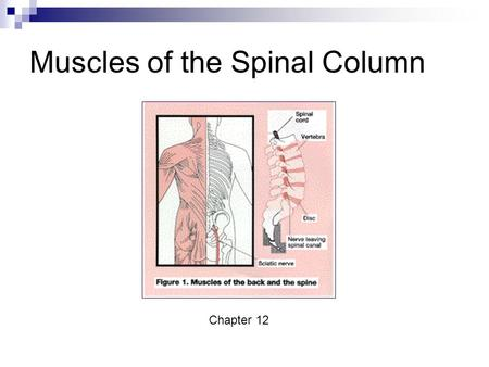 Muscles of the Spinal Column Chapter 12. Cervical Muscles.