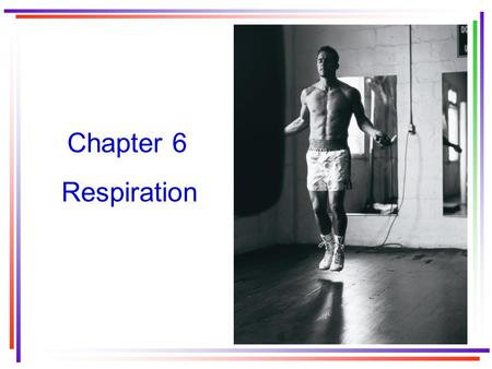 Chapter 6 Respiration. The three components of the respiratory system External respiration Gas transport Internal respiration.