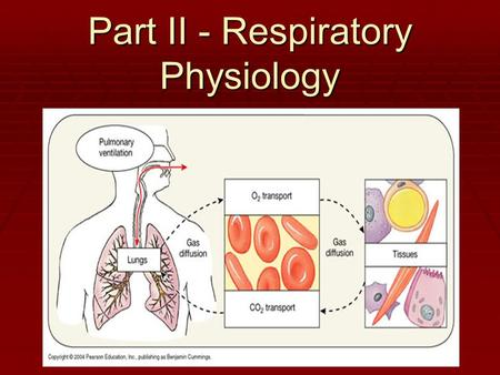 Part II - Respiratory Physiology. 4 distinct events  Pulmonary ventilation: air is moved in and out of the lungs  External respiration: gas exchange.