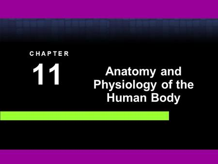 C H A P T E R 11 Anatomy and Physiology of the Human Body.