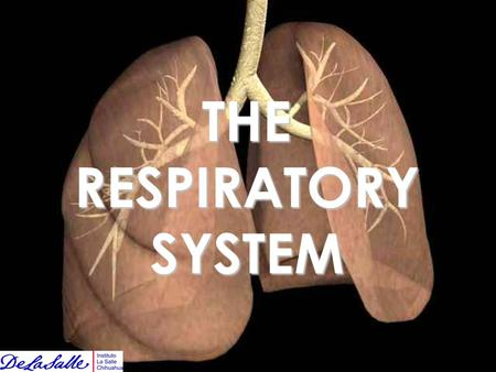 THE RESPIRATORY SYSTEM. We breathe in order to take good oxygen into our bodies and get rid off dirty carbon dioxide.