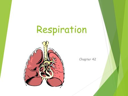 Respiration Chapter 42. Respiration  Gas exchange  Movement of gas across membrane  Diffusion (passive)  To improve gas absorption  Increase surface.