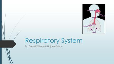Respiratory System By: Gerald Williams & Najhee Duhon.