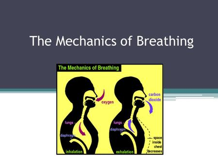 The Mechanics of Breathing