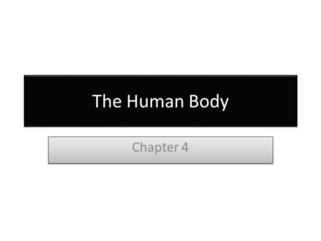 The Human Body Chapter 4. The Planes of the Body Anterior Posterior Midline Midclavicular line Midaxillary Anterior Posterior Midline Midclavicular line.