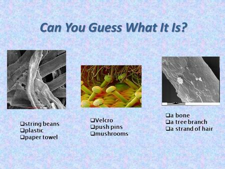 Can You Guess What It Is?  string beans  plastic  paper towel  Velcro  push pins  mushrooms  a bone  a tree branch  a strand of hair.