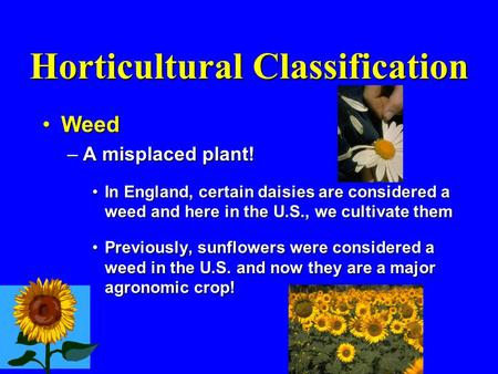 Horticultural Classification WeedWeed –A misplaced plant! In England, certain daisies are considered a weed and here in the U.S., we cultivate themIn England,