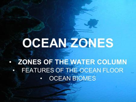 Riley austin allie savannah and mikaila benthic zone for Ocean floor features definition