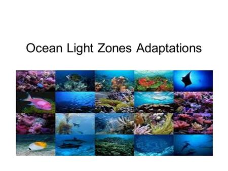 Ocean Light Zones Adaptations. The Three Light Zones Sunlight zone Twilight zone.