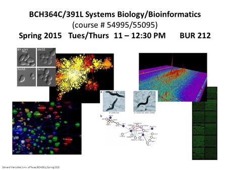 BCH364C/391L Systems Biology/Bioinformatics (course # 54995/55095) Spring 2015 Tues/Thurs 11 – 12:30 PM BUR 212 Edward Marcotte/Univ. of Texas/BCH391L/Spring.