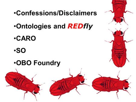 Confessions/Disclaimers Ontologies and REDfly CARO SO OBO Foundry.