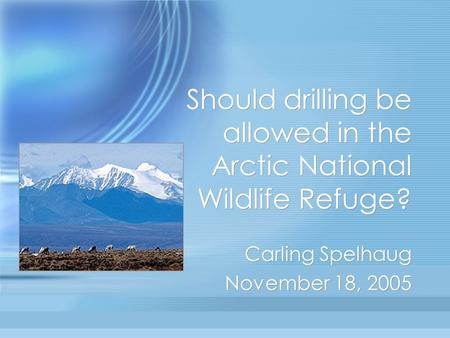 Should drilling be allowed in the Arctic National Wildlife Refuge? Carling Spelhaug November 18, 2005 Carling Spelhaug November 18, 2005.