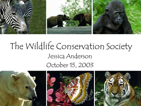 The Wildlife Conservation Society Jessica Anderson October 15, 2003.