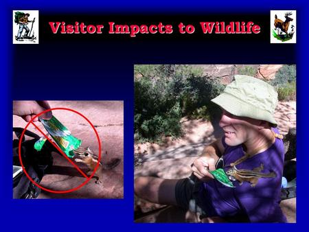 Visitor Impacts to Wildlife. Presentation Objectives 1. Review and illustrate visitor impacts to wildlife. 2. Review how education and low impact practices.