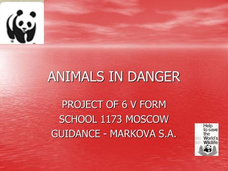 PROJECT OF 6 V FORM SCHOOL 1173 MOSCOW GUIDANCE - MARKOVA S.A.