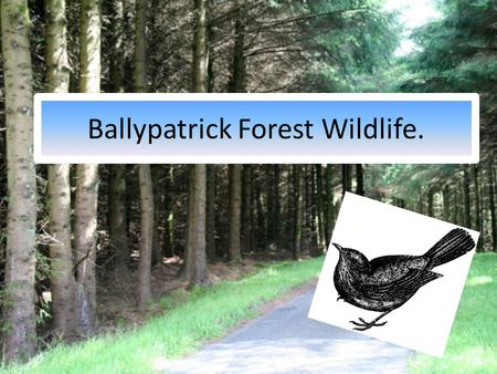 Ballypatrick Forest Wildlife.. Success Criteria. By the end of this lesson you should be able to: Name some of the wildlife found in the forest. Draw.