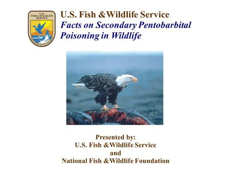 U.S. Fish &Wildlife Service Facts on Secondary Pentobarbital Poisoning in Wildlife Presented by: U.S. Fish &Wildlife Service and National Fish &Wildlife.