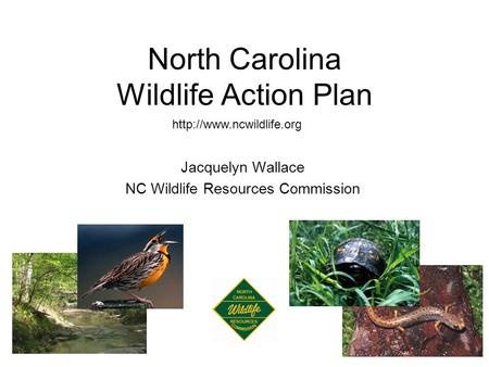 North Carolina Wildlife Action Plan  Jacquelyn Wallace NC Wildlife Resources Commission.