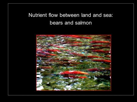 Nutrient flow between land and sea: bears and salmon.
