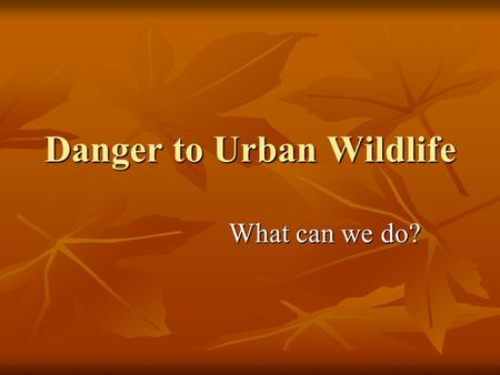 Danger to Urban Wildlife What can we do?. What are some problems for wild animals that live in urban areas? (sample responses) Loss of habitat Loss of.