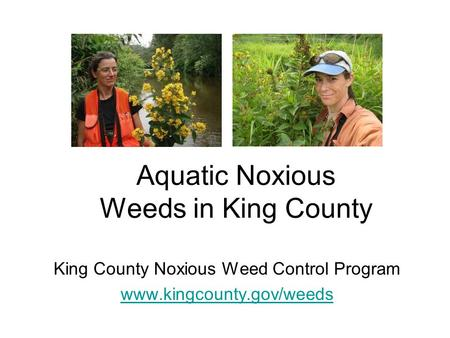 Aquatic Noxious Weeds in King County King County Noxious Weed Control Program www.kingcounty.gov/weeds.