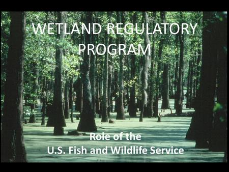 WETLAND REGULATORY PROGRAM Role of the U.S. Fish and Wildlife Service.