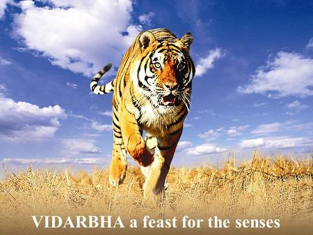 VIDARBHA a feast for the senses. The Region of Maharashtra with its vibrant life, rich historical background, ethnicity, biodiversity and mineral wealth.