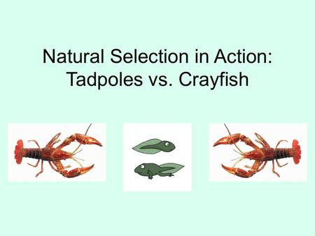Natural Selection in Action: Tadpoles vs. Crayfish.