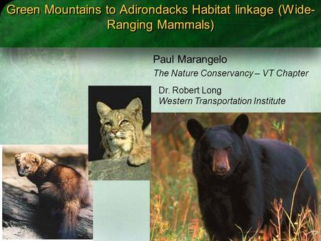 Green Mountains to Adirondacks Habitat linkage (Wide- Ranging Mammals) Paul Marangelo The Nature Conservancy – VT Chapter Dr. Robert Long Western Transportation.