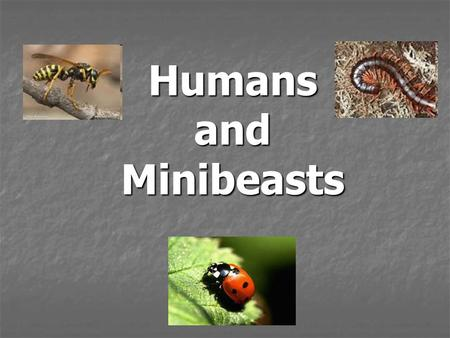 Humans and Minibeasts. Questions to think about... What effect does human behaviour have on mini beasts and their habitat? What effect does human behaviour.
