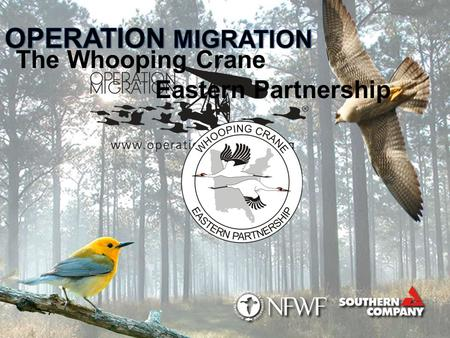 The Whooping Crane Eastern Partnership. Partnership Overview S ince 2001, Operation Migration has led 13 generations of Whooping cranes on their first.