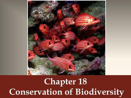 Chapter 18 Conservation of Biodiversity. Genetic Diversity Scientists want to conserve genetic diversity so that the species can survive environmental.