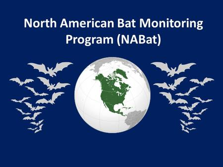 North American Bat Monitoring Program (NABat). Core Team & Supporters Susan Loeb, USFS-SRS Jeremy Coleman, USFWS Laura Ellison, USGS Tom Rodhouse, NPS.
