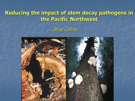 Reducing the impact of stem decay pathogens in the Pacific Northwest Brad Collins.
