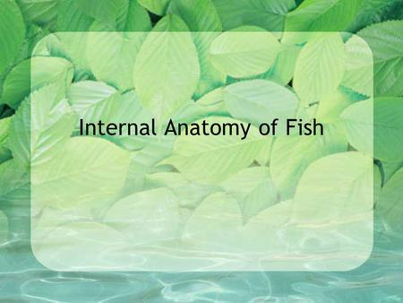 Internal Anatomy of Fish