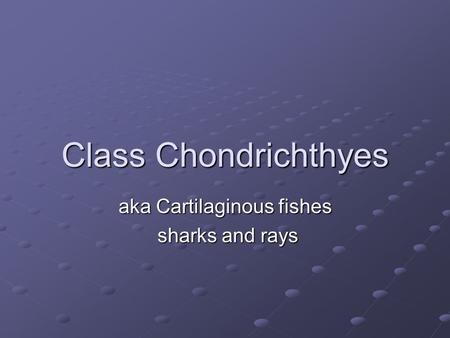 Class Chondrichthyes aka Cartilaginous fishes sharks and rays sharks and rays.