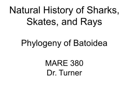 Natural History of Sharks, Skates, and Rays